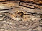 Jakim sposobem funkcjonalnie ochronić posiadane drewno przed pasożytami?